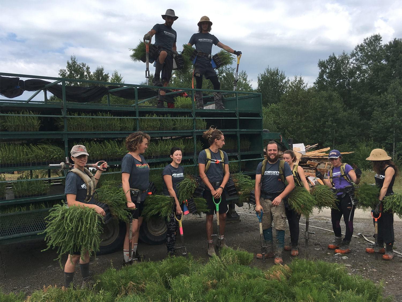 We plant trees. 2