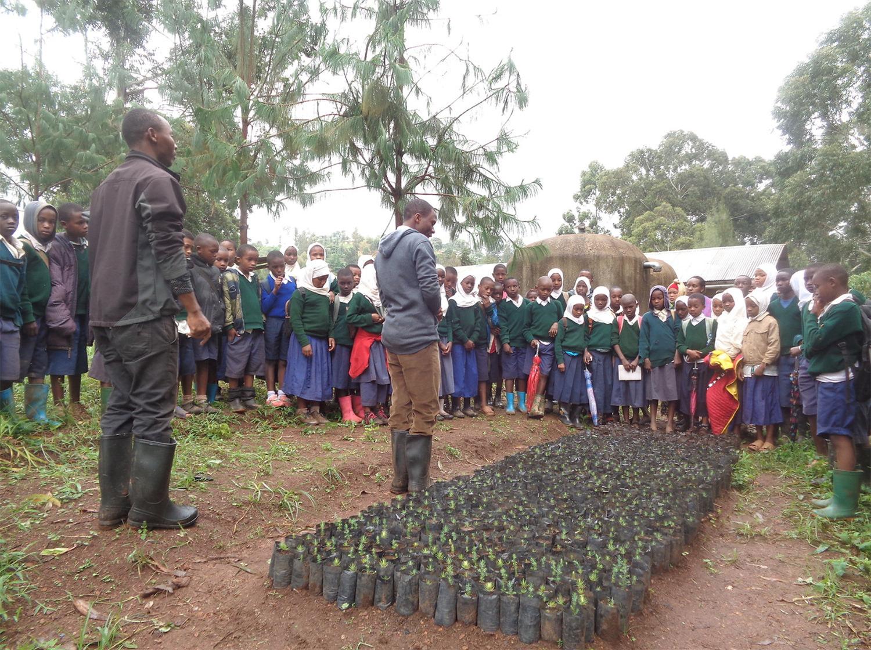 We plant trees. 5